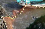 Presentan demanda en Japón para detener la caza de delfines